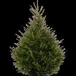 Spar Kerstboom