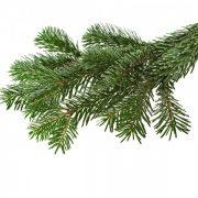 Naalden Nordmann Kerstboom
