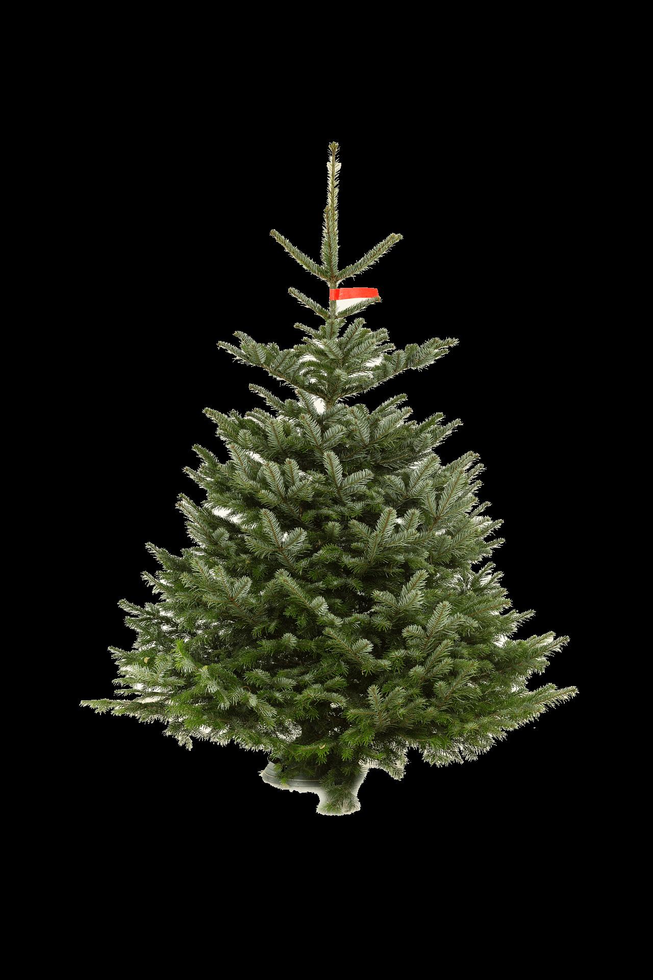 Nordmann Kerstboom Kerstbomen Amsterdam Bestel Online
