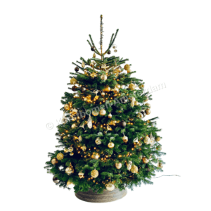 Versierde kerstboom - Beverly Hills