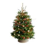 Versierde Kerstboom Hermitage